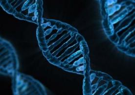 Yale researchers are working to cure inherited defects in fetal mice by editing their genes with a single injection of DNA and PNA, a synthetic material that mimics DNA.